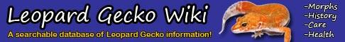 Úvodná stránka wikipédie gekončíkov.